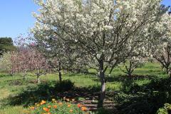 applegarden-farm-cottage-gallery-8